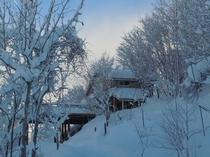 純白の新雪