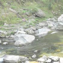 貞光川の清流