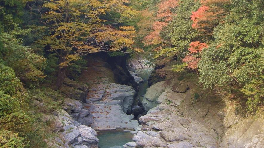 *【剣山の紅葉】空気が澄んで紅葉が綺麗な行楽にぴったり!