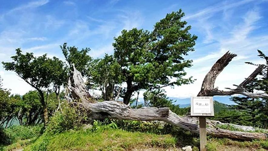 *【剣山】山の管理人が登山道を日々しっかりと整備しており、初心者の方でも安心して登れる山です♪