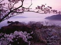 サクラと竹田城