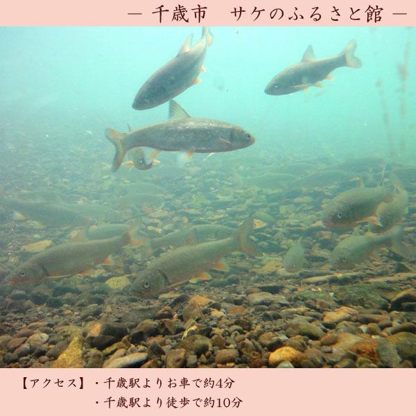 【観光】 サケのふるさと館