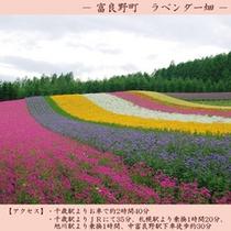 【観光】 ラベンダー畑