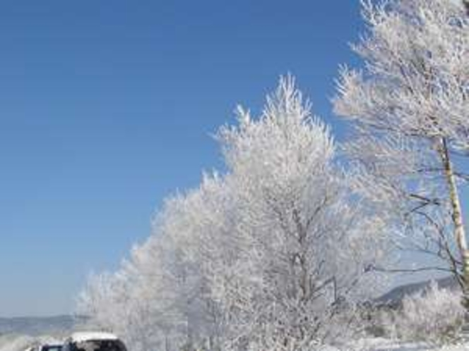 氷点下15度の世界霧氷