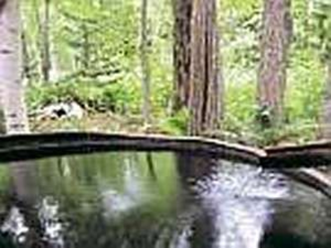 森の中で森林浴と温泉露天風呂「美想の湯」:貸切対応