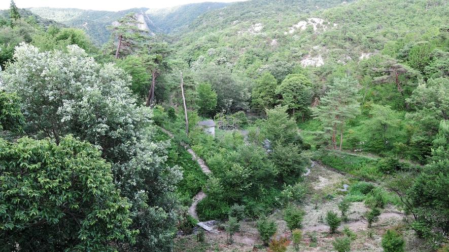 *【本館からの景色】ハイキングに人気の北六甲の麓「太陽と緑の道」の途中にございます