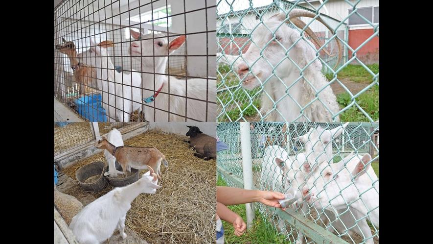 【ハイジ牧場】ヤギや羊もたくさん待ってます♪