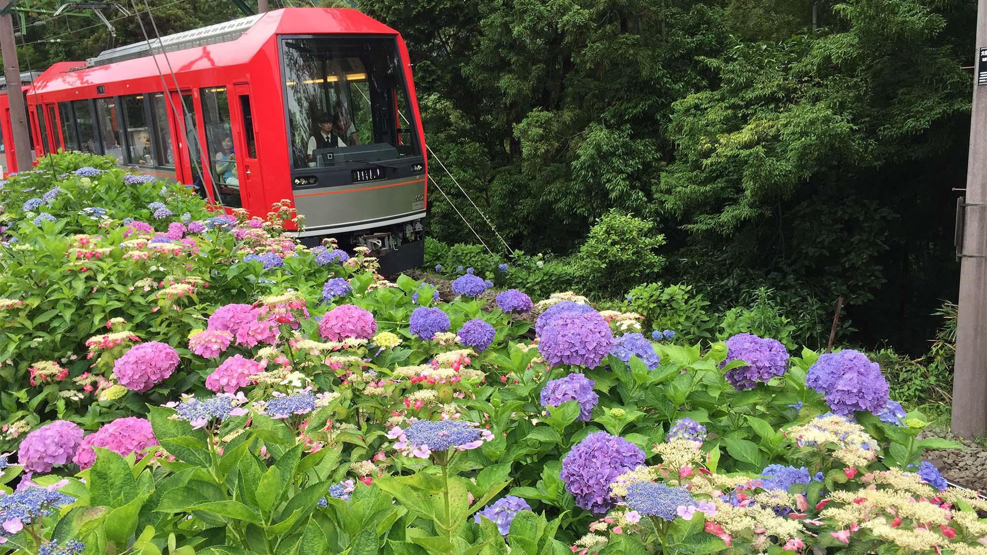 ■箱根登山鉄道(あじさい列車)