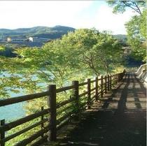 遊歩道(新緑)