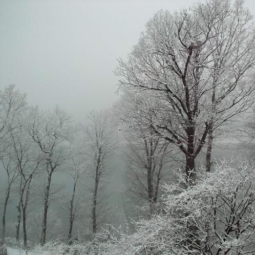 赤谷湖 冬