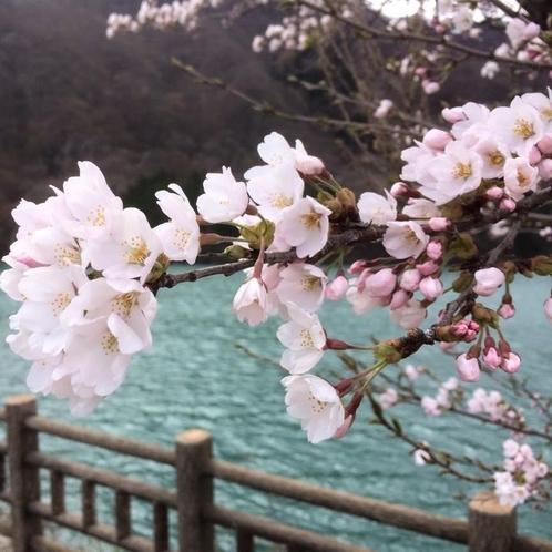 赤谷湖遊歩道 春
