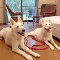 二部屋限定!わんちゃんと一緒にご宿泊♪  大型犬も大歓迎。