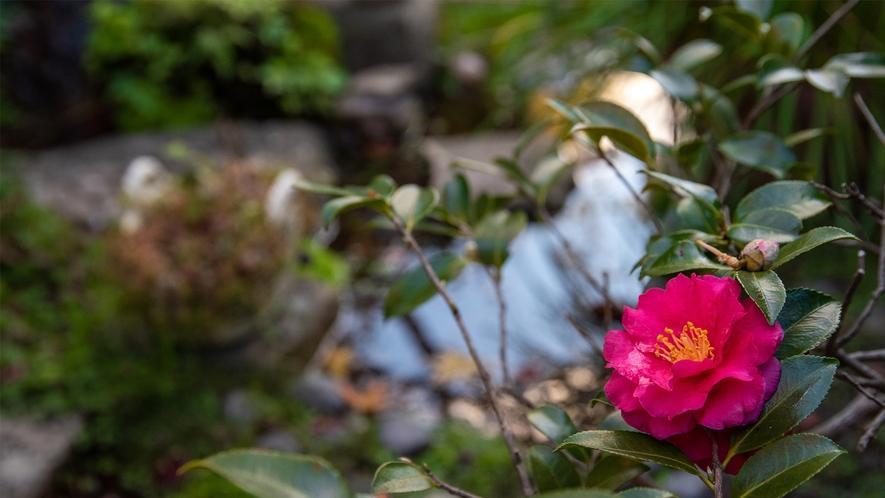 *季節ごとのお花を楽しみ来られる方も