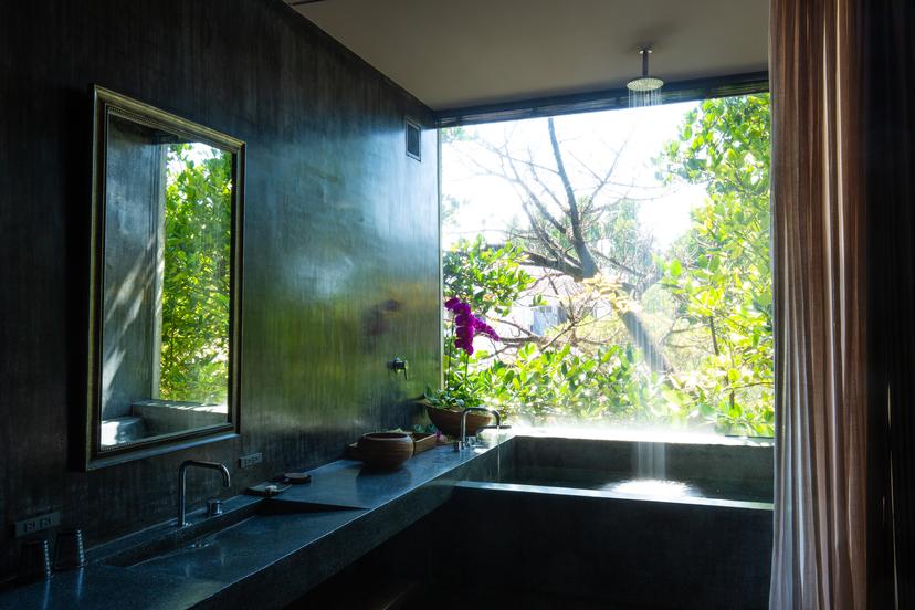 亜熱帯の森に降るようなレインシャワー