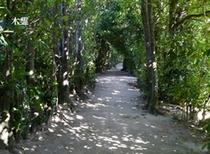 朝目覚めたら 福木のこもれびの中をお散歩