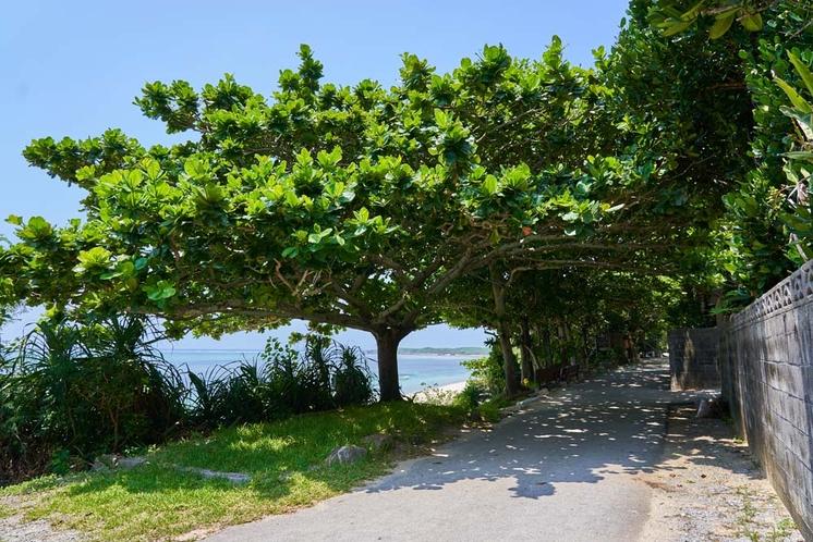 海沿いの大木の木陰でひとやすみ