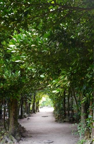 琉球風水の聖地 備瀬のフクギ並木