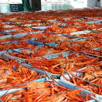 関西では香住港でのみ水揚げされることから「 香住ガニ 」と呼ばれるベニズワイガニ
