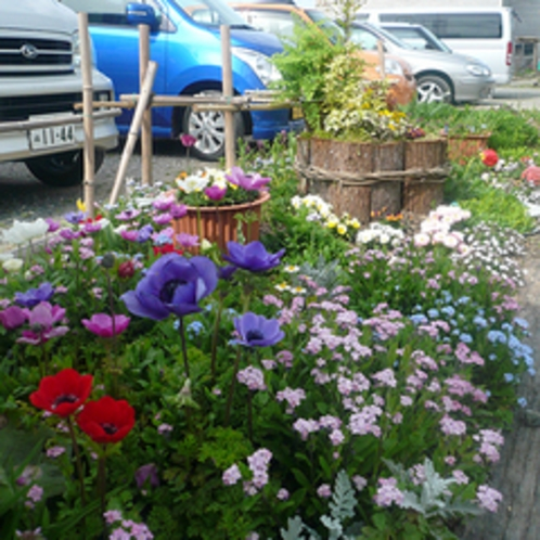 春には、地区で「 オープン・ガーデン 」も開催します