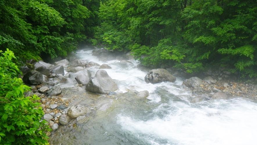 *【周辺景色】手つかずの自然が残り、森林浴にもオススメ