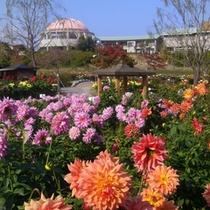 *季節の花々に囲まれながらカップルやファミリーの方もニッコリの旅へ!