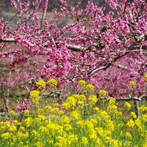 *【周辺スポット】桃の花。自然・歴史と調和した甲州市は、四季折々の景観を楽しめます!