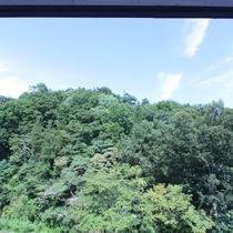 半露天風呂から山側の緑豊かな眺望