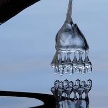 【冬】氷点下の世界が生み出す儚げで美しい氷の現象。