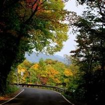 【秋】洞爺湖へ向かう道中、紅葉ドライブも楽しみのひとつ。