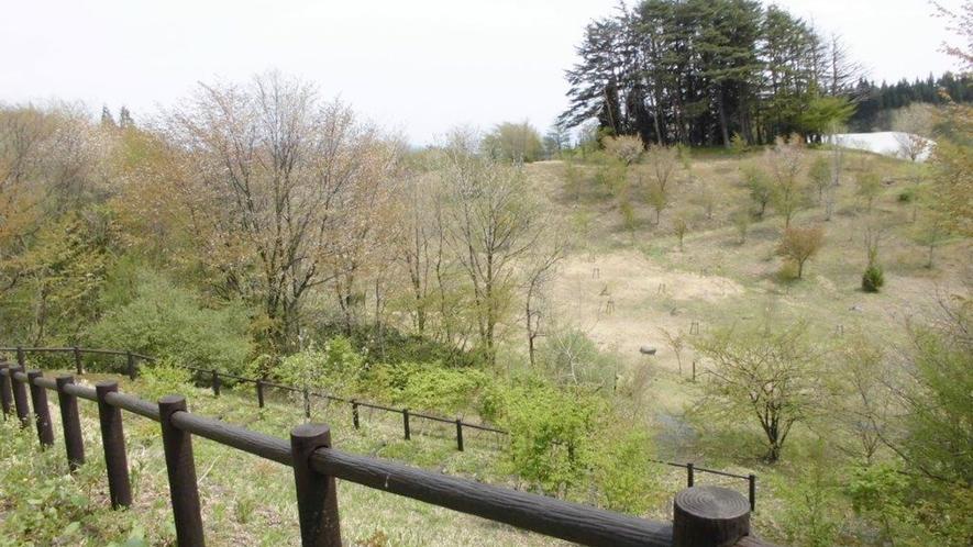 *【散策コース(当館から徒歩約2分)】散策コース内ではマイナスイオンたっぷり!