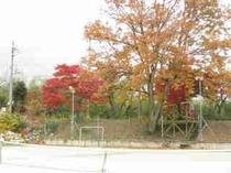 施設周辺の紅葉