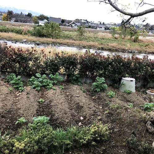 コテージの裏には畑があり、夏には野菜を採ってお召し上がりいただけます☆