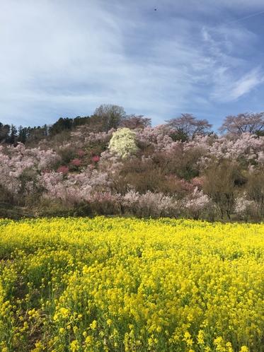 福島の観光名所 花見山公園