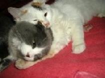 愛猫のふくちゃんとマリーちゃん