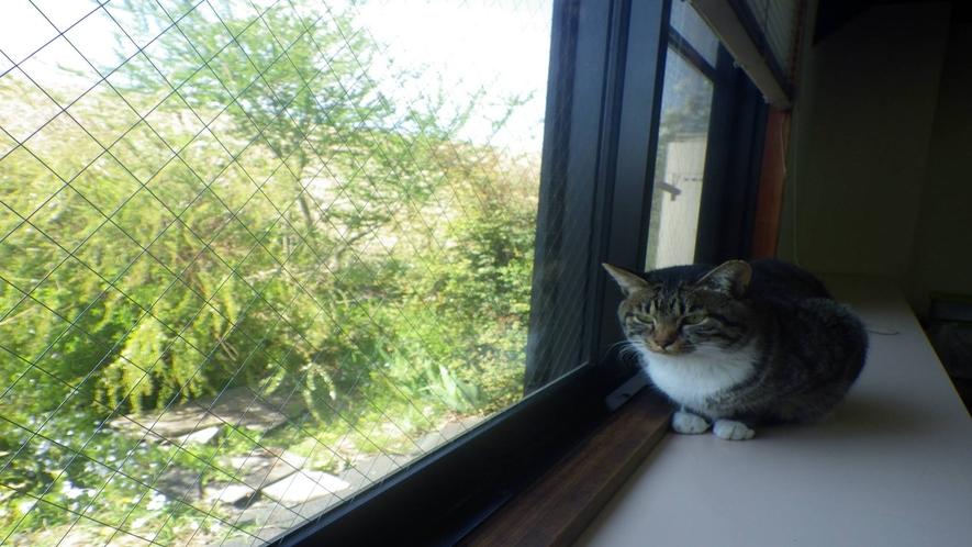 *【館内の様子/ある日の風景】  当館の『看板猫』☆館内をお散歩していますのであしからず。