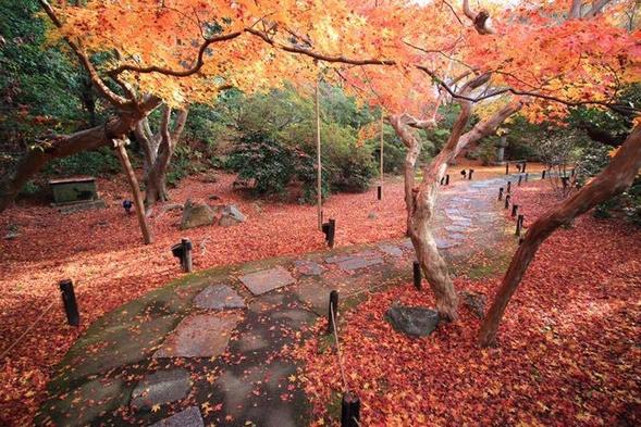 【きょうと魅力再発見旅プロジェクト/京都府民限定】一人旅にもご夫婦にも!朝食付プランで紅葉を楽しもう
