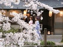 桜並木横★お花見確約