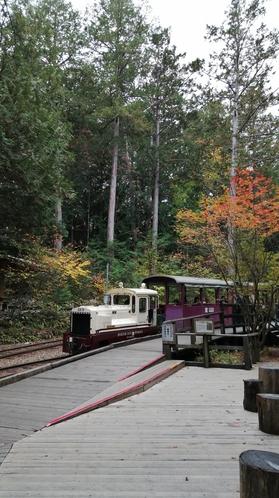 赤沢森林公園
