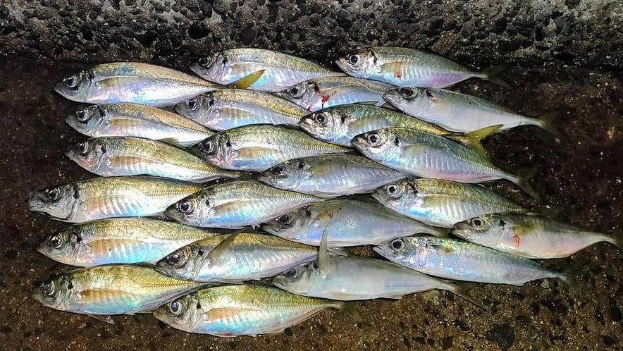 釣り体験プラン