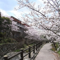 外観(春)