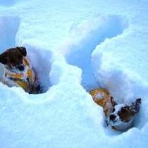 お庭で雪遊び