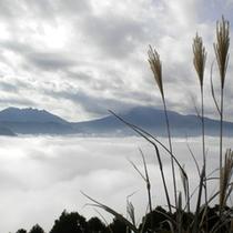 雲海とススキ