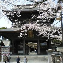 阿蘇神社の桜