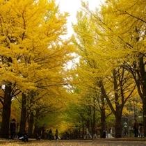 北海道大学イチョウ並木1