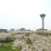 五稜郭タワー~春~