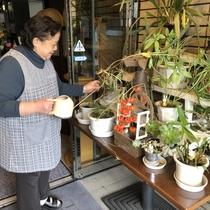 【 観葉植物 】 入口の観葉植物は、奥様が担当しているスペースで、玄関先はご主人担当です♪