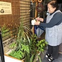 【 観葉植物 】玄関に来て、『ホッ♪』とするホテルでありたいという事で、観葉植物は昔から育てています