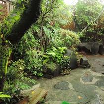 *【すっぽんぽん風呂への道のり】館内よりすぐではありますが、ジャングルのような道を抜けます。