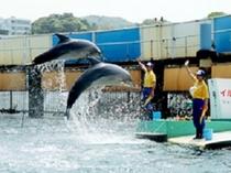 【鳥羽湾めぐりとイルカ島】湾内一周の途中でイルカ島に寄港、入場無料でイルカとアシカのショーが楽しめる
