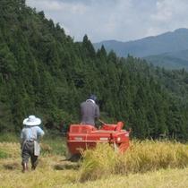 自家米の刈り取り